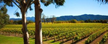 header-nz-vineyard