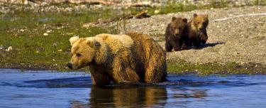 header-bears