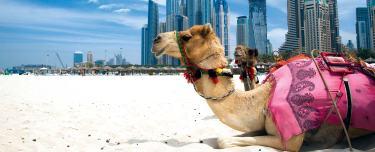 header-camels