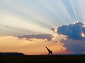 Africa | Kenya - 2nd Place: Karl Kuhn